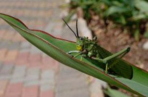 recomendación de comer insectos